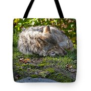 Timber Wolf Pictures 42 Tote Bag
