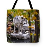 Timber Wolf Pictures 444 Tote Bag