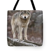 Timber Wolf Pictures 495 Tote Bag