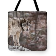 Timber Wolf Pictures 498 Tote Bag