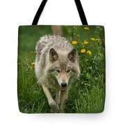 Timber Wolf Pictures 59 Tote Bag