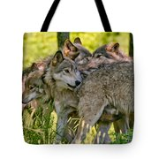 Timber Wolf Pictures 61 Tote Bag