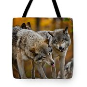Timber Wolf Pictures 62 Tote Bag