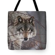 Timber Wolf Pictures 620 Tote Bag