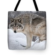 Timber Wolf Pictures 683 Tote Bag