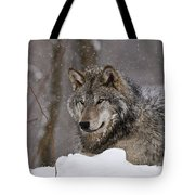 Timber Wolf Pictures 74 Tote Bag