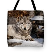 Timber Wolf Pictures 776 Tote Bag