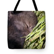 Timber Wolf Pictures 820 Tote Bag