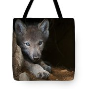Timber Wolf Pictures 875 Tote Bag
