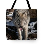 Timber Wolf Pictures 954 Tote Bag