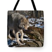 Timber Wolf Pictures 969 Tote Bag