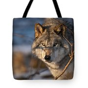 Timber Wolf Pictures 981 Tote Bag