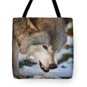 Timber Wolf Pictures 985 Tote Bag