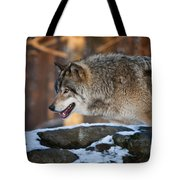 Timber Wolf Pictures 991 Tote Bag
