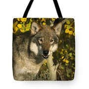 Timber Wolf Teton Valley Idaho Tote Bag