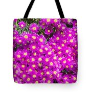 Tiny Dancer - Colorful Midday Flowers Lampranthus Amoenus Flower In Bloom In Spring. Tote Bag