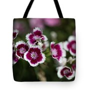 Tiny Pink And White Flowers Shower Curtain For Sale By Joy Watson