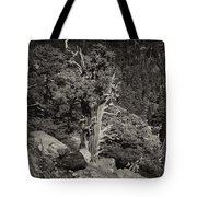 Tioga Pass Road Sepia Tote Bag