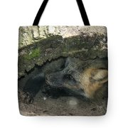 Tired Fox Tote Bag