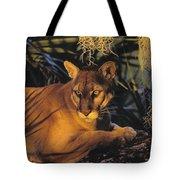 Tk0397, Thomas Kitchin Florida Panther Tote Bag