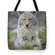 Tk0607, Thomas Kitchin Coyote In Spring Tote Bag