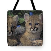 Tk0615, Thomas Kitchin Cougarmountain Tote Bag