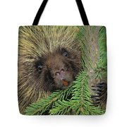 T.kitchin 14107c, Porcupine In Spruce Tote Bag