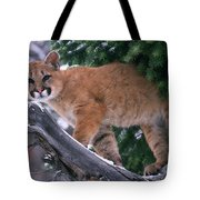 T.kitchin 15274d, Cougar Kitten Tote Bag