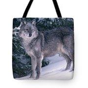 T.kitchin, 19821c Gray Wolf, Winter Tote Bag