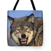 T.kitchin Wolf Snarling Tote Bag by First Light