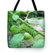 Tobacco Hornworm - Manduca Sexta - Six Spotted Hawkmoth Tote Bag
