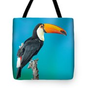 Toco Toucan Perched Tote Bag