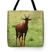 Topi Antelope  Tote Bag