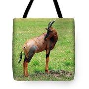 Topi Antelope On The Masai Mara Tote Bag