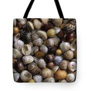 Topshells Whelk And Periwinkle Shells Tote Bag