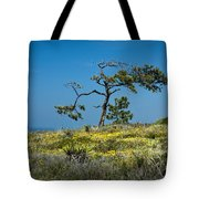 Torrey Pine On The Cliffs At Torrey Pines State Natural Reserve Tote Bag