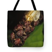 Tortoise Beetle Mother Shields Tote Bag