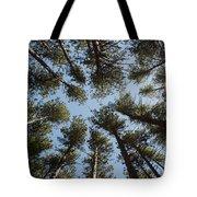 Towering White Pines Tote Bag