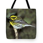 Townsends Warbler Tote Bag