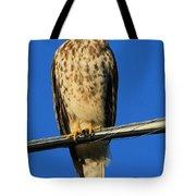 Traffic Hawk Tote Bag