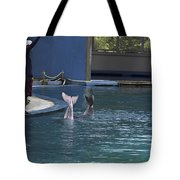 Trainer And The Tails Of A Duo Of Dolphins At The Underwater World Tote Bag