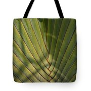 Traveller's Palm Patterns Dthb1543 Tote Bag