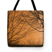 Tree And Shadow At Cogswells Grant Tote Bag