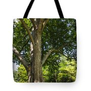 Tree At Msu Tote Bag