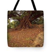 Tree At Royal Botanic Garden Tote Bag