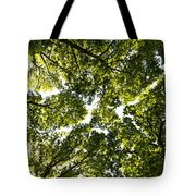 Tree Canopy Tote Bag