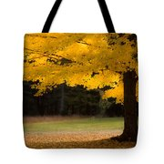 Tree Canopy Glowing In The Morning Sun Tote Bag