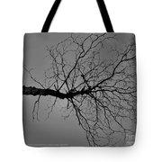 Tree Fall Tote Bag