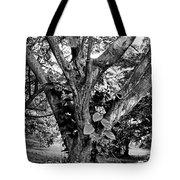 Tree Giant Tote Bag
