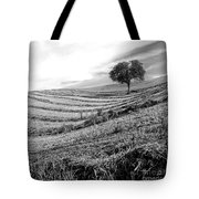 Tree In A Mowed Field. Auvergne. France Tote Bag